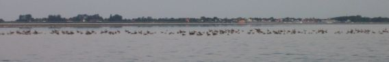 View of Vitte at 5am with geese on the dry flats in front