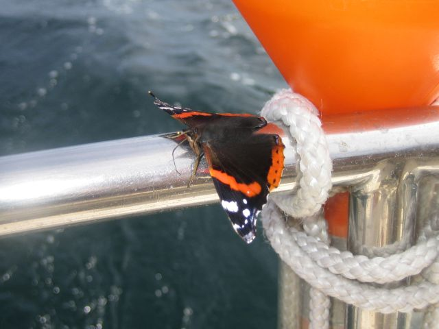 A butterfly joining our journey